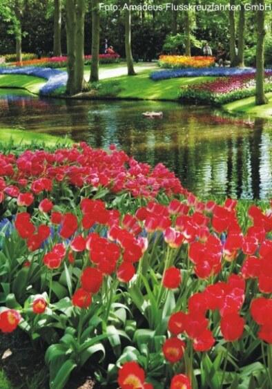 Tulpenkreuzfahrt mit der MS Amadeus Brilliant